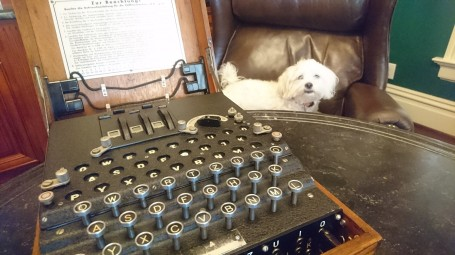 Cosmo - resident guardian and protector of Enigma machines, at the Cipher History Museum, San Jose